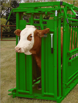 cattle head gate